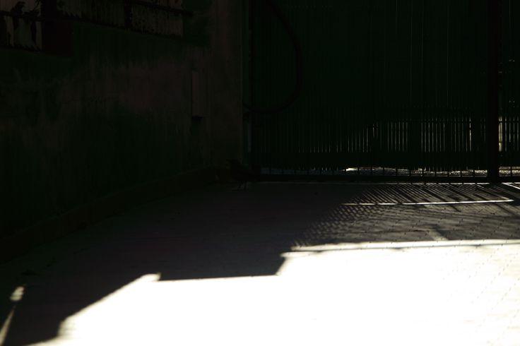 Ombra nella luce