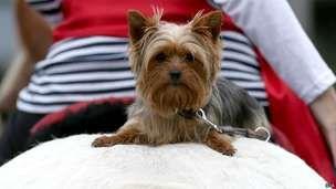 İsviçre'de 'Kedi köpek yemek yasaklansın' çağrısı - BBC Türkçe