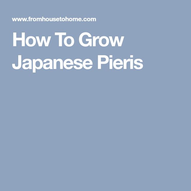 How To Grow Japanese Pieris