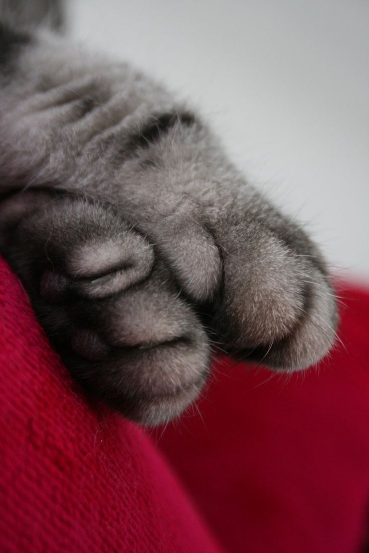 """Cats leave paw prints on your heart."""" --Anonymous"""