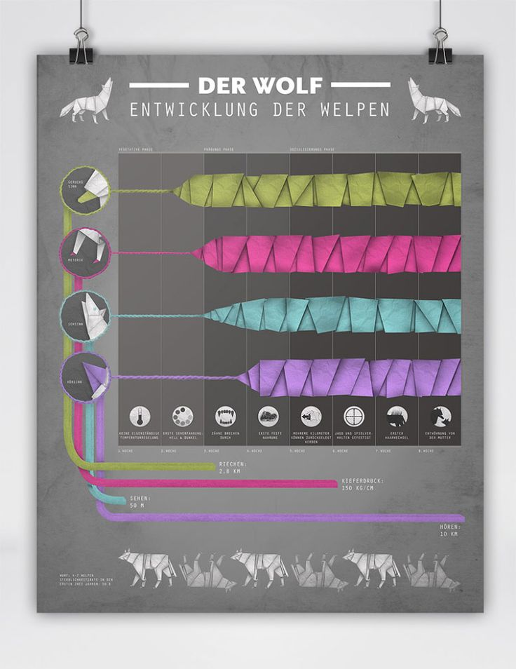 the wolf in origamis style infographic • The Wolf • Der Wolf - Welpenentwicklung