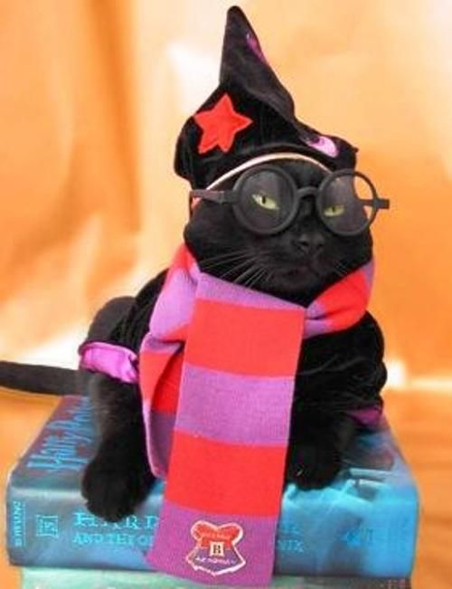 15 hilarious cats in costumes kitty potter costume