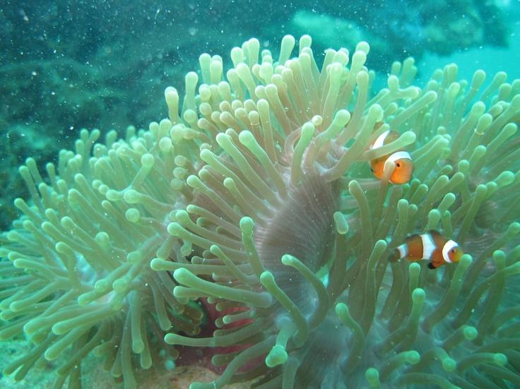 @ Batam sea - Indonesia.  http://batamtour.info