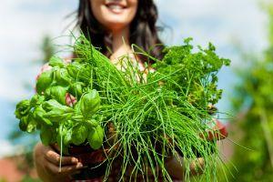 10 Best Herbs for Female Hormone Balance - Global Healing Center