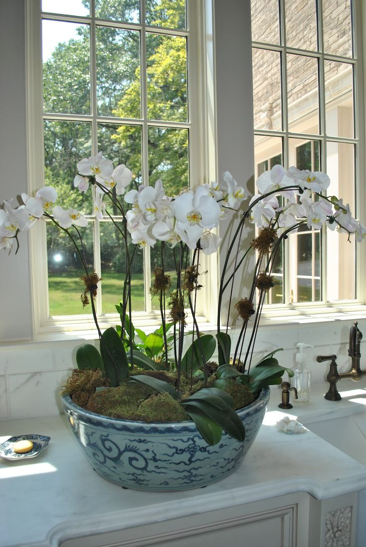 Orchid in some sort of container (ginger jar, silver punch bowl?) on table in front entry