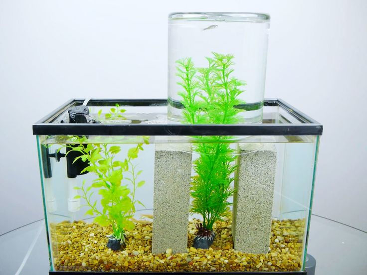 This awesome fish tank trick shows an inverted glass with water higher than the water level of the fish tank.  How does this work?