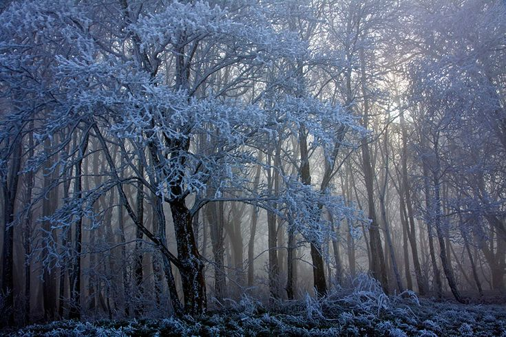 42 Best Whimsical Winter Wonderland Images On Pinterest