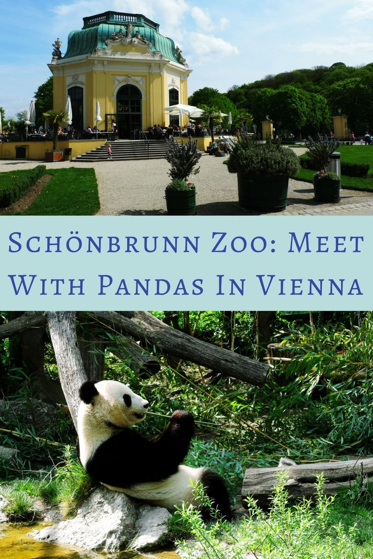 Neither of the many exciting facts made us so excited to visit Schönbrunn Zoo as the one that there are Giant pandas among its residents...