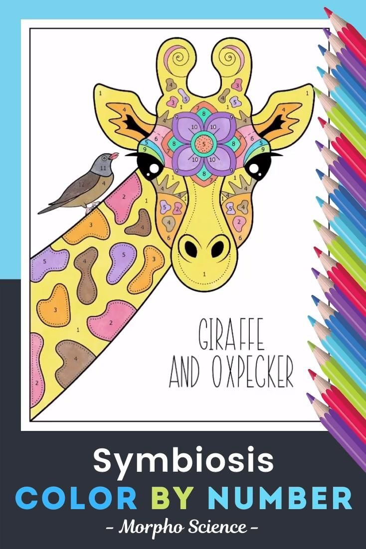 Symbiosis Color By Number Science Color By Number Activity Video Video Giraffe Coloring Pages Symbiosis Science