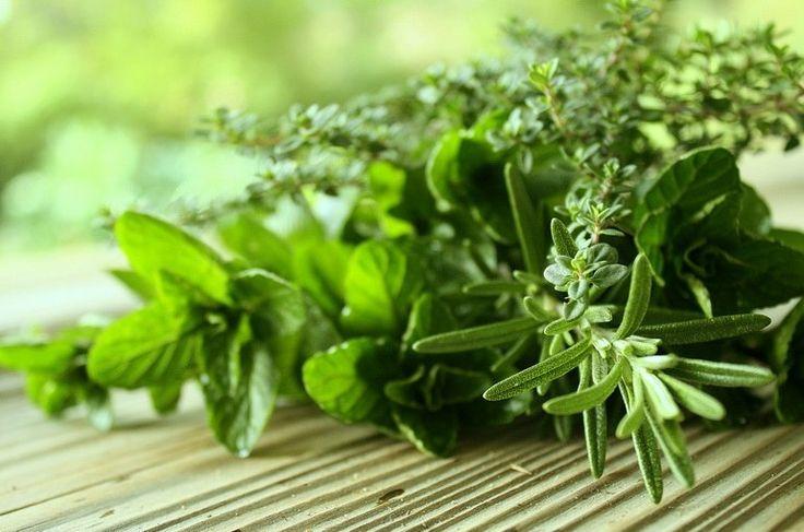 Очищение организма от шлаков травами - один из лучших и безопасных способов оздоровления. Травы для очищения организма показали свою эффективность.