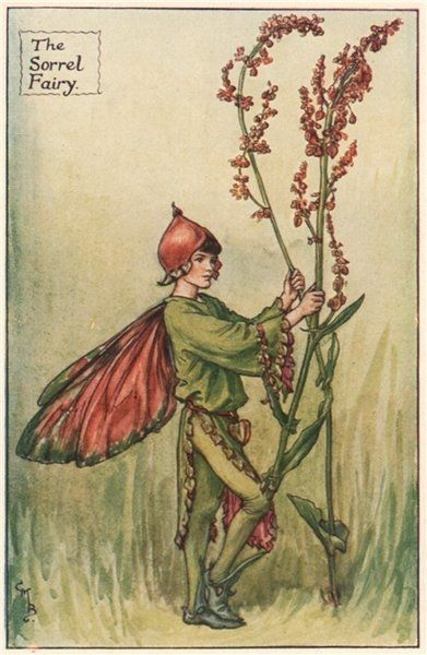 FLOWER FAIRIES/BOTANICALS: The Sorrel Fairy; This is an original vintage Cicely Mary Barker Flower fairies colour print. It is not a modern reproduction, c1935; approximate size 11.0 x 7.0cm, 4.25 x 2.75 inches