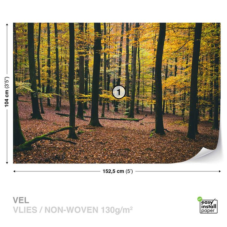 WALL-MURAL-PHOTO-WALLPAPER-XXL-Trees-Forest-Nature-Autumn-Leaves-JD-1388WS