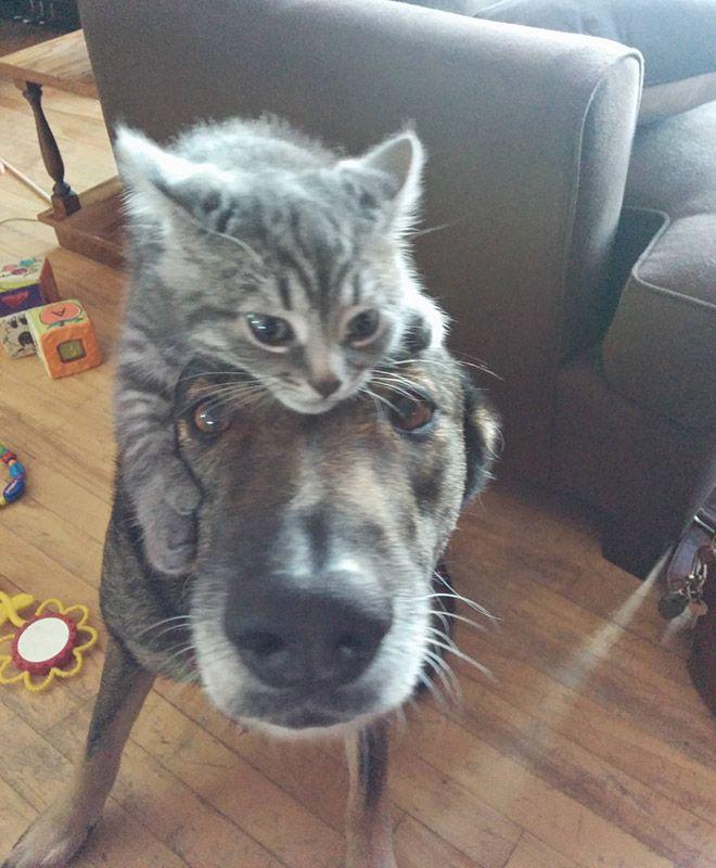 Latest Fashion Trend: Cat Hats