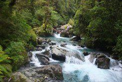 Flowing stream. #activeadventures.com Holly Brooker, 'Manuka', January 2013