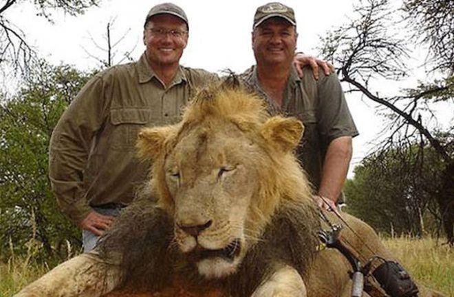 Injusticia: La muerte del león Cecil quedará impune en Zimbabwe El dentista estadounidense Walter Palmer no será procesado por matar al animal. http://www.argnoticias.com/mundo/item/38961-la-muerte-del-le%C3%B3n-cecil-quedar%C3%A1-impune-en-zimbabwe