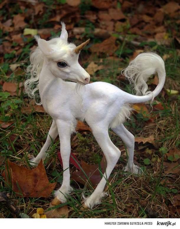 unicorn :)