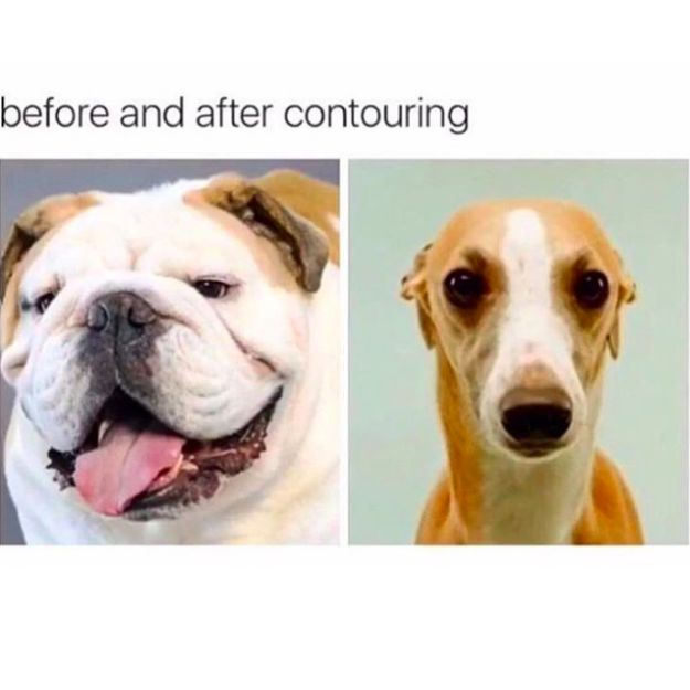 These dogs who are just #Relatable:   21 Dog Memes That Will Cure Your Bad Day