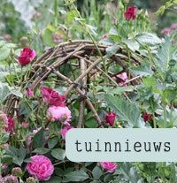 This site has such beautiful garden plans & photos!  Love the grapevine ball thing.  Blauwpaars beplantingsplan: blauwe & paarse border | Tuinieren.nl