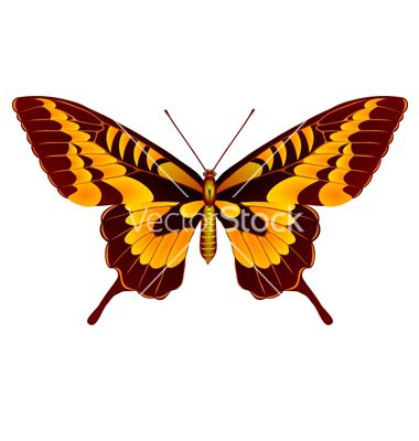 #Papilio thoas #butterfly vector