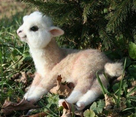baby lama...para morir de ternurA