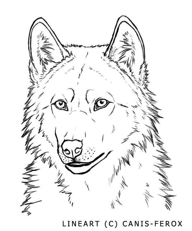 Wolf Line Drawing Tattoo : Best images about wolf lineart line art on pinterest