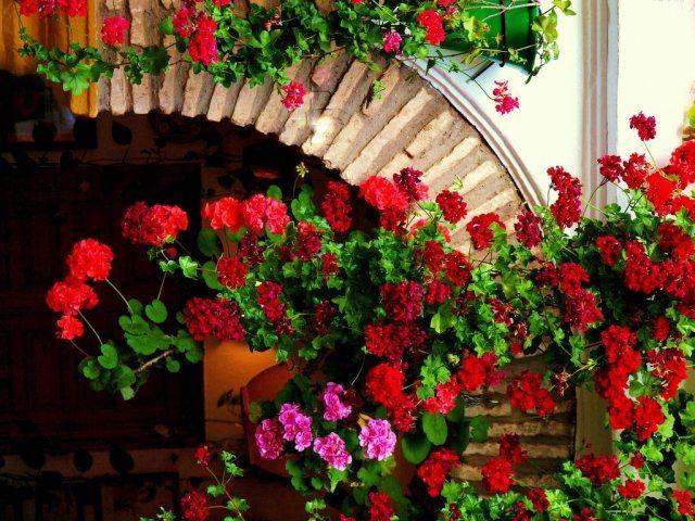 geranien pflanzen Blumen in Balkonkästen tipps balkon frühling