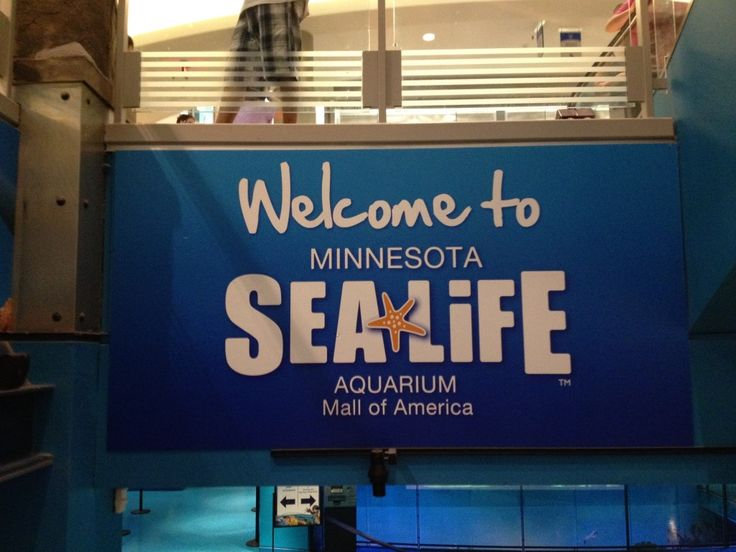 Wordless Wednesday at the Sea Life Aquarium in MN