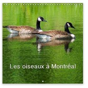 Calendrier les oiseaux à Montréal