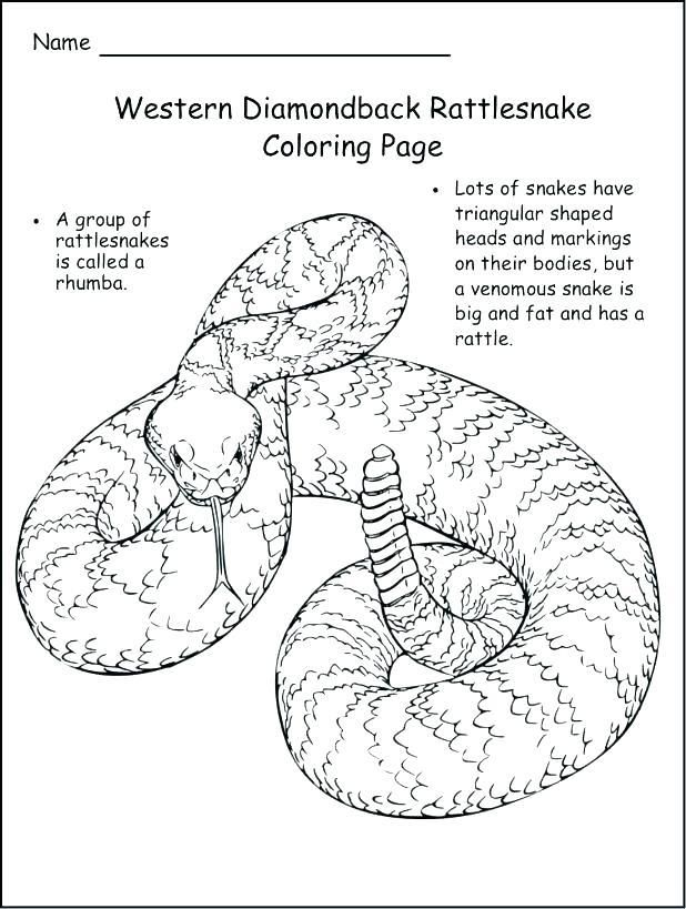 Rattlesnake Coloring Page Snake Coloring Pages Coloring Pages Free Online Coloring