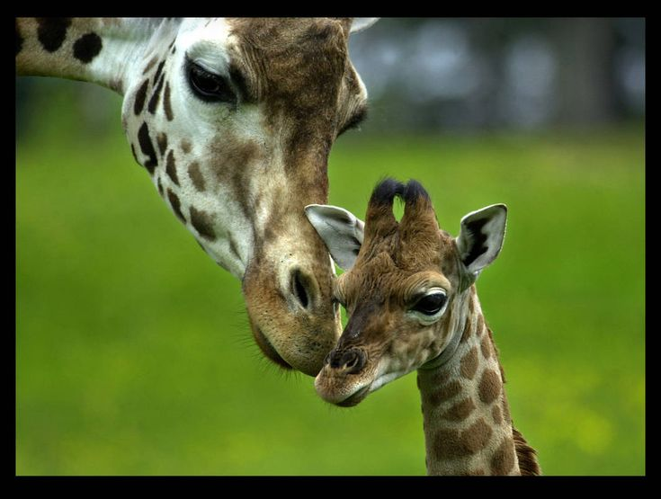 Baby Girl and Me.....well, if we were giraffs