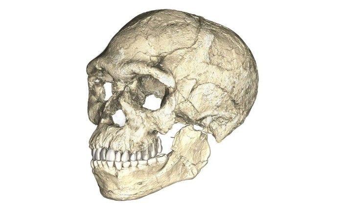Cientistas descobrem os mais antigos fósseis do 'Homo sapiens' - Jornal O GloboReconstrução do mais antigo crânio de Homo sapiens já descoberto - REUTERS      Leia mais: https://oglobo.globo.com/sociedade/ciencia/cientistas-descobrem-os-mais-antigos-fosseis-do-homo-sapiens-21442723#ixzz4jMXoPkWv   stest