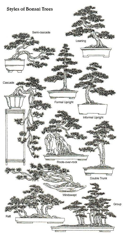 Styles & Shapes of Bonsai Trees http://vur.me/tbw/Bonsai-Tree-Secrets.I really love the look of Bonsai trees.Please check out my website thanks. www.photopix.co.nz