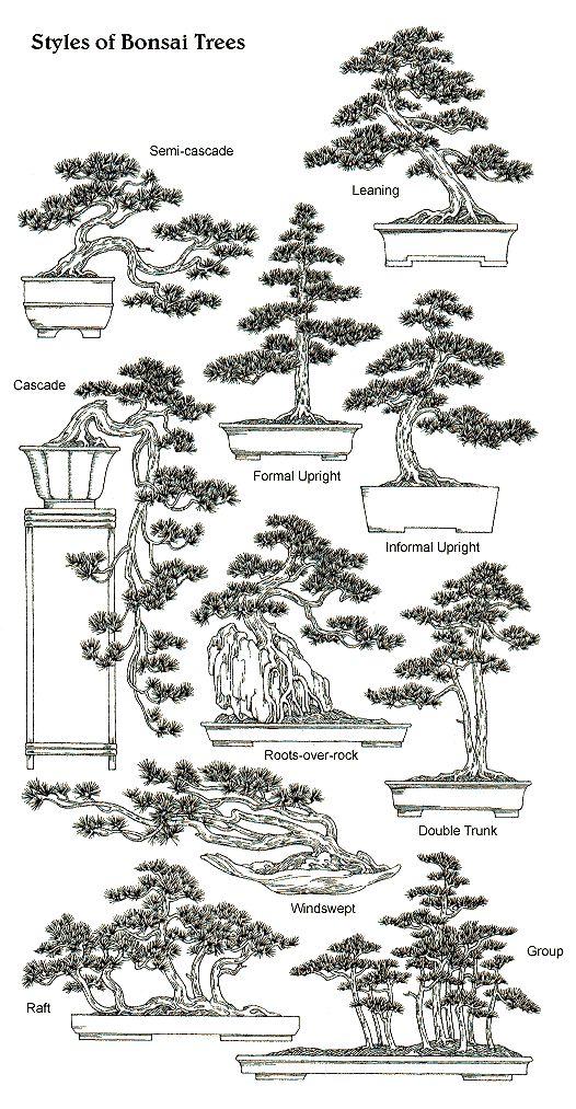 // Bonsaï // Bonzai // Bonsai // Bonne Zaille // Affiche // Design // Petit arbre japonais trop mignon