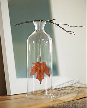 a great DYI idea for fall. Beautiful and simple