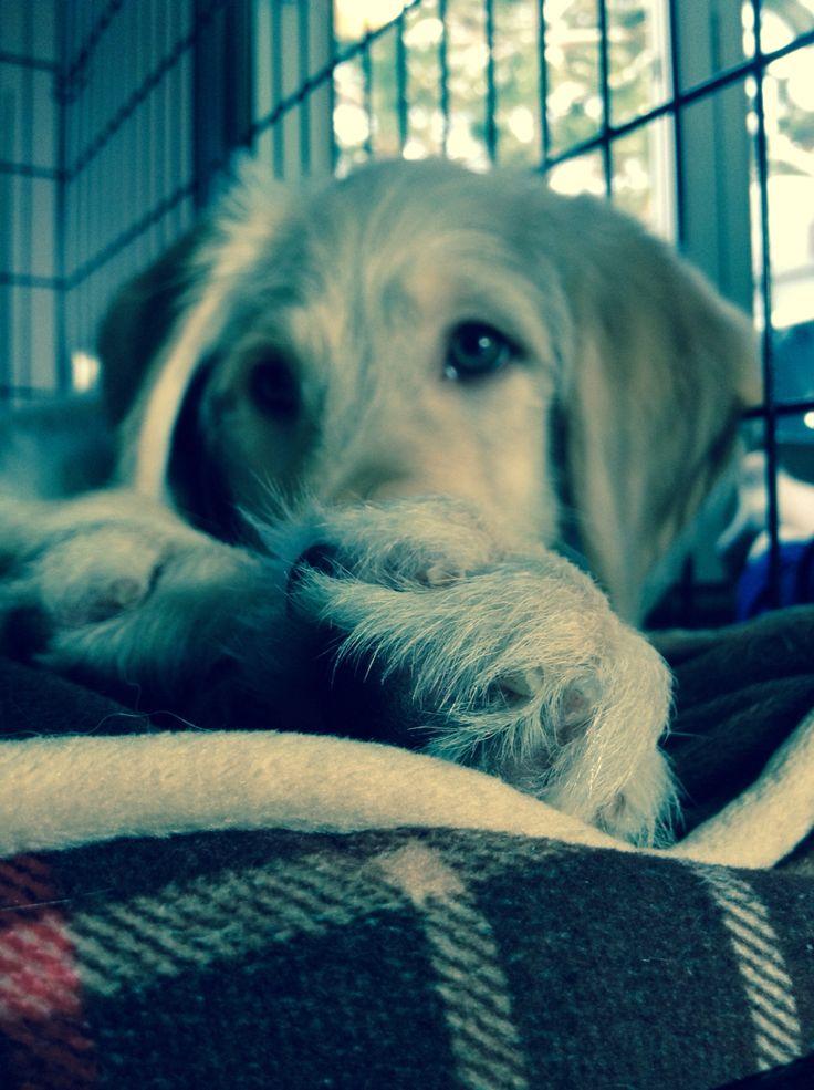 My wonderful puppy Ferris Shakira Bailey!
