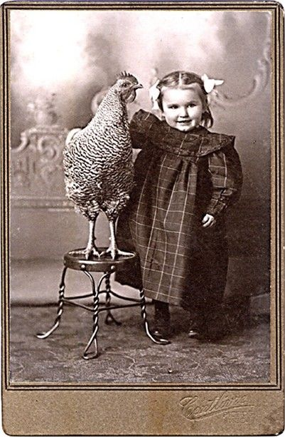 I think this is pretty wonderful that a little girl from this era would have parents allowing her photo (rare in those days) and be allowed to have her pet chicken in it, too! She's darling and could care less about her part in the picture..how sweet.