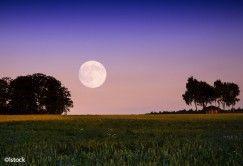 Jardinez avec la Lune: le calendrier 2017