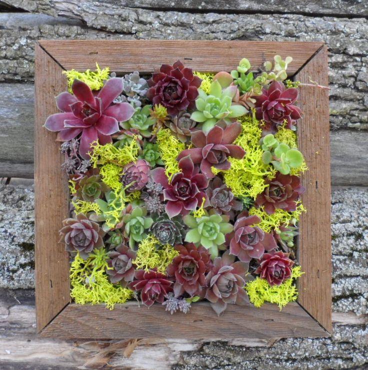 Succulent Wall Art 20 best succulent boards images on pinterest | succulents garden
