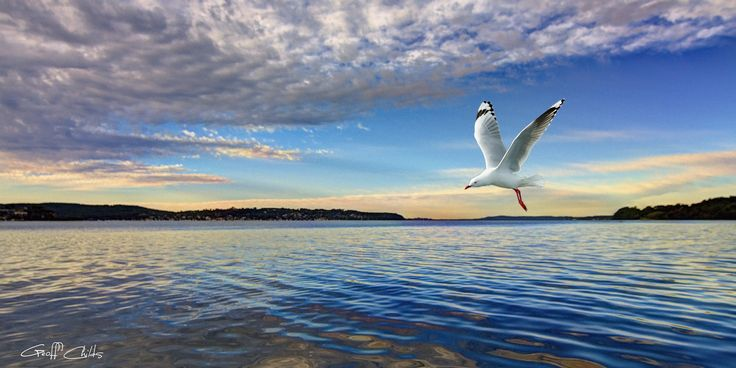 Seagull Marinescape  Beautiful Australian coastal ocean screensaver photo, a truly uplifting inspirational digital desktop or wallpaper print with colorful blue sky and ocean water reflections featuring a Seagull in full flight. Nautical wall art seascape, a fine art instant download.  Photographed in Queensland, Australia.