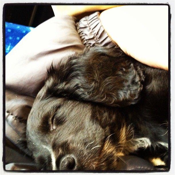 Ve vlaku se dobře spí..