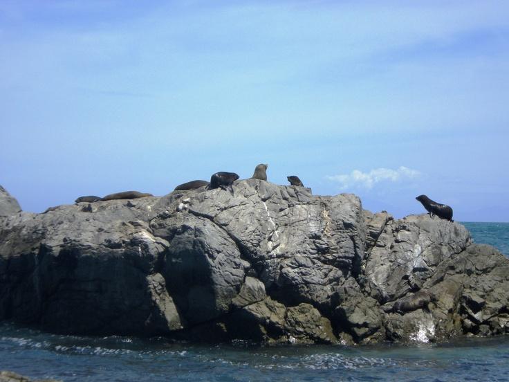 Seal colony.