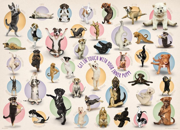 Yoga Puppies. Family puzzle. 300 large size pieces.