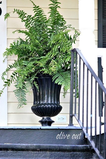 Olive Out: Urns On Southern Porches
