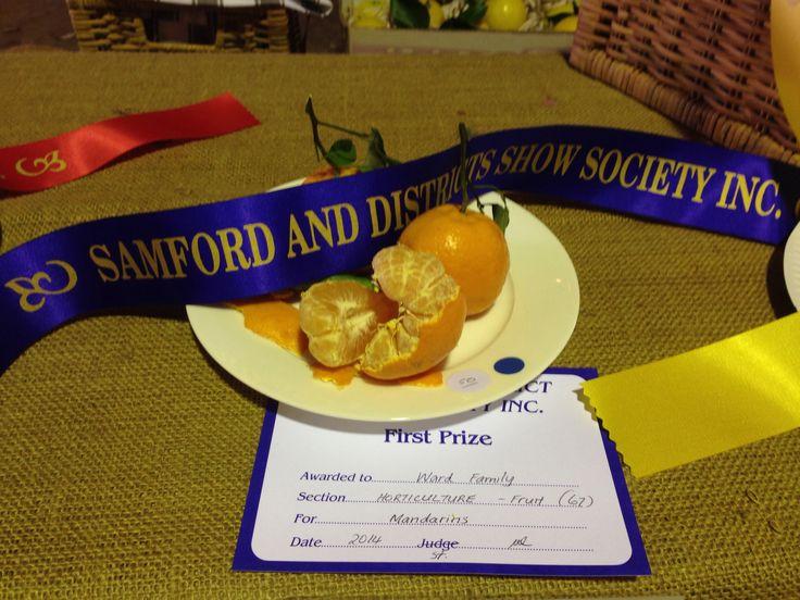Samford Valley 2014 Show - First prize Mandarins