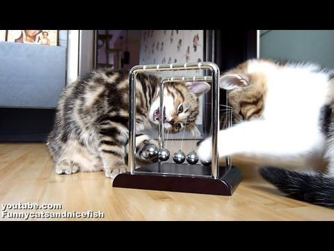 Kittens Learn About Physics