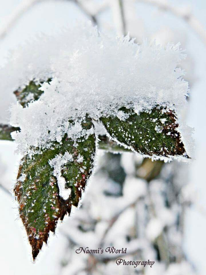 A piece of winter :* #winter #snow #nature