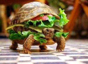 http://blog.biostop.ro/articole/slow-food-o-organizatie-careia-ii-pasa/