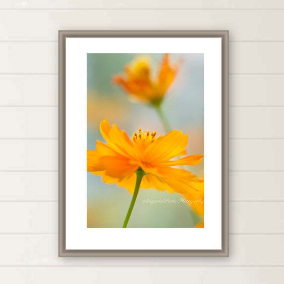 Gorgeous Cosmos flower photograph to bring you a little sunshine! http://etsy.me/2ta4vfA