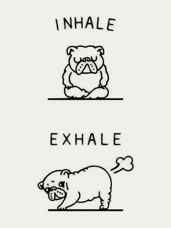 Respiracion bulldog