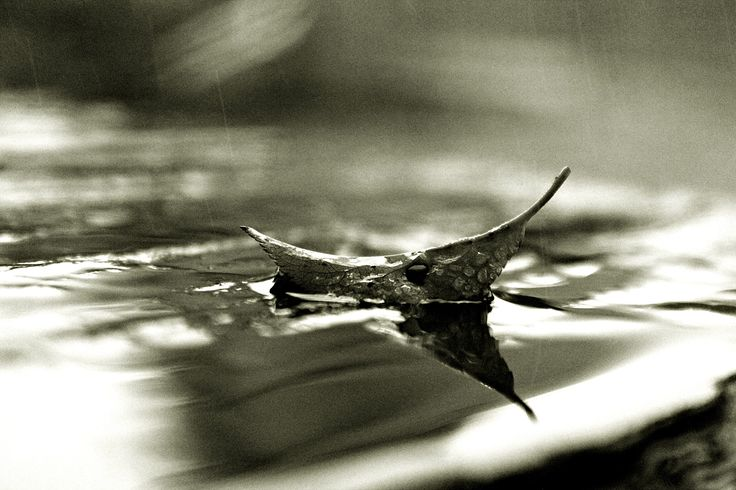 Autumn leaf floating in the rain... like a boat...